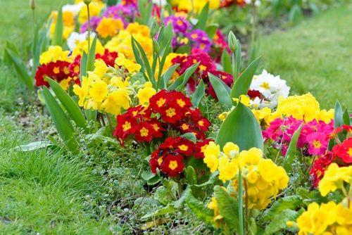 Spring Flowering Perennial Chores News Leighton Buzzard Garden